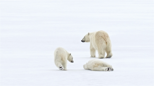 I Told You It Was Slippy by Keith Snell