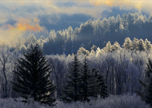 Frosted Wood At Sunrise by Keith Snell