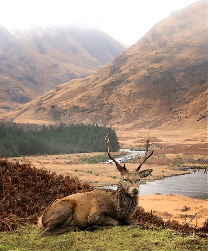Laird Of The Glen by Keith Snell