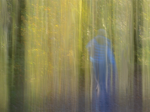 A Walk in the Woods by David Woodthorpe