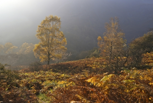 Autumn on the Fell by Marilyn Woodthorpe