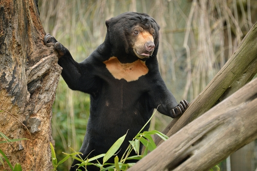 Sun Bear by Wendy Jordan