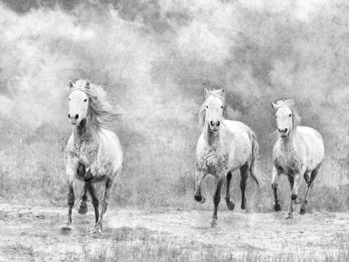 Out of the Mist by Julie Walker
