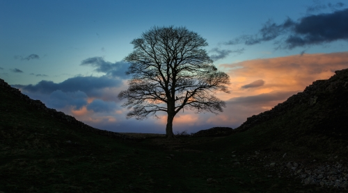 Late Evening, Sycamore Gap by Tom Stenhouse