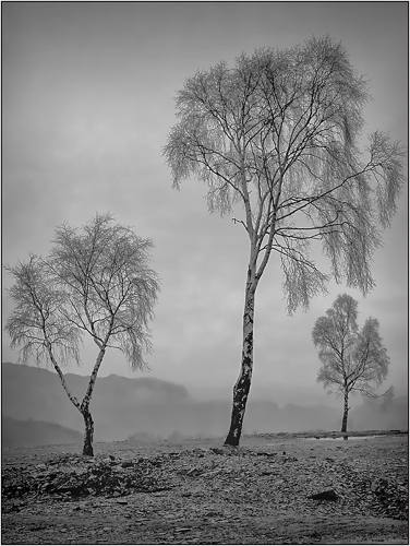 Three Trees Hodge Close by Ronnie Gilbert