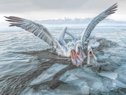 Fish Frenzy through the Ice by Alan Walker