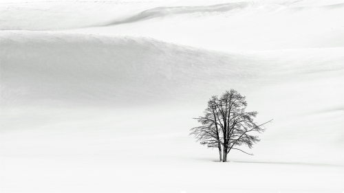 The Lone Tree by Keith Snell