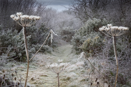 Path to frosty morn by David Woodthorpe